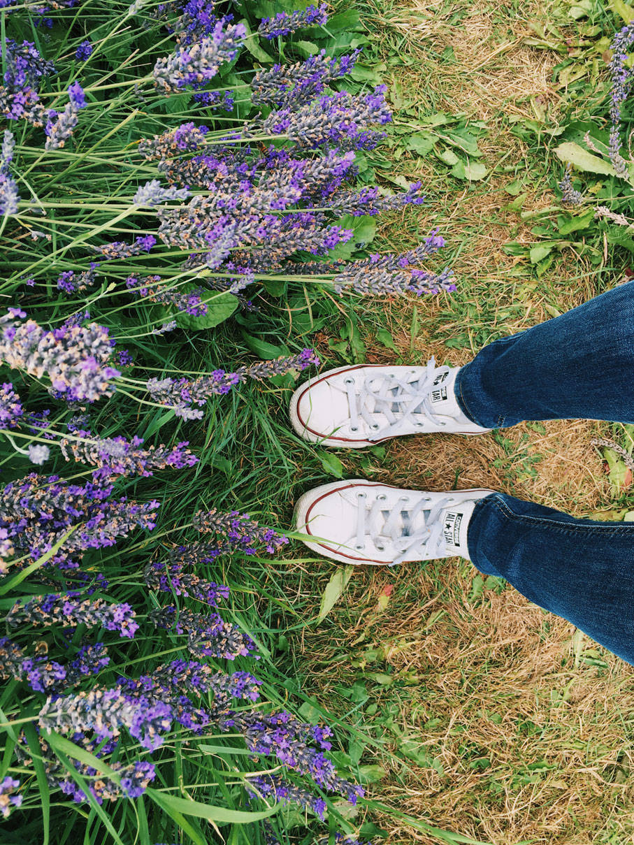 Lavender Fields in London photo ok but first coffee 10