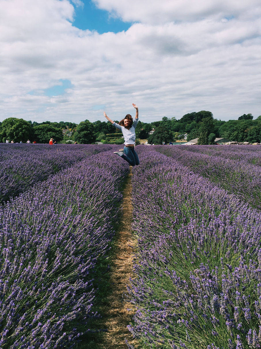 Lavender Fields in London photo ok but first coffee 8