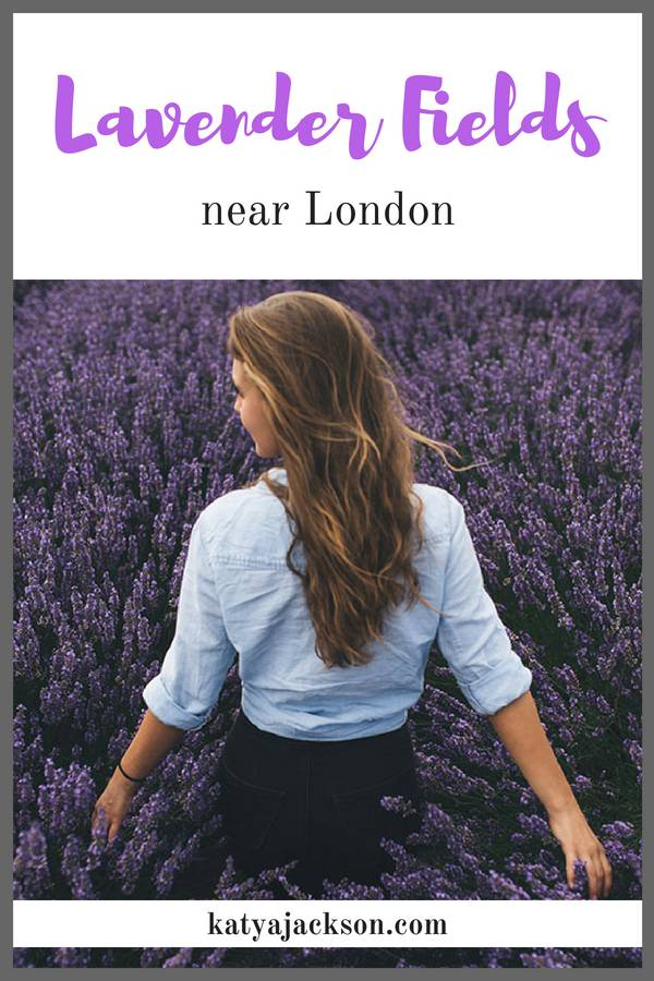 4 Lavender fields near London and best time to visit Katya Jackson