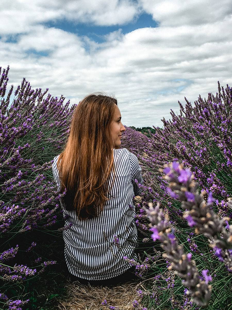 Lavender fields near London and the best time to visit