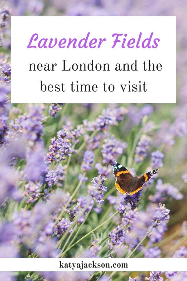London Lavender Fields and the best time to visit Katya Jackson blog