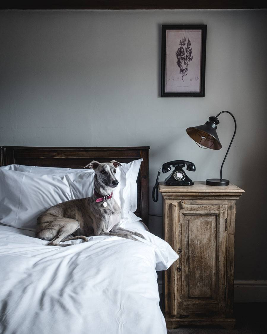 Whippet, Travel with dogs, Whippet puppy, whippet brindle, Widbrook Grange Hotel Review, Bradford on Avon hotel, Wiiltshire hotel, England Travel, Uk pretty towns, where to go from London, UK Blog, Katya Jackson, Georgian house England, Rustic interior